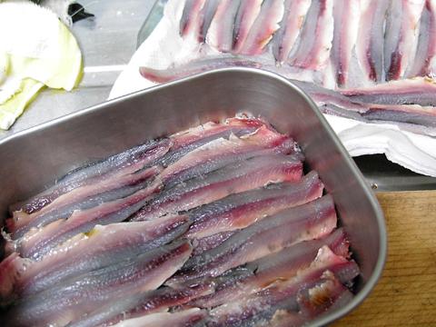 anchovy2.jpg